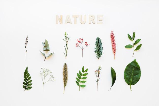 Состав с различными листьями