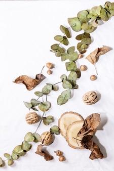Композиция с желтыми кленовыми листьями, ветвями эвкалипта и каштанами на белом фоне. плоская планировка, копия пространства
