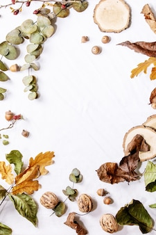 Composition with yellow maple leaves, eucalyptus branches and chestnuts over a white background. flat lay, copy space