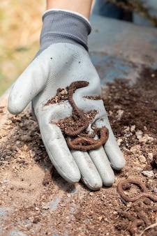 지렁이와 퇴비 정물 개념
