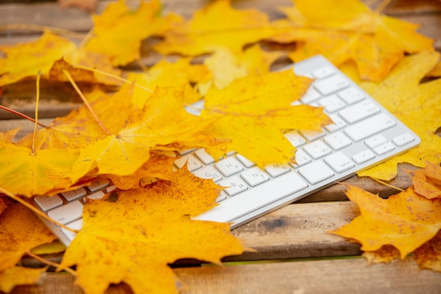 Computer keyboard and maple leaves on table