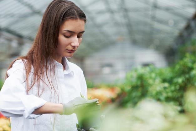 Сконцентрируйтесь на работе. фотография девушки в перчатках, работающей с растением в горшке.