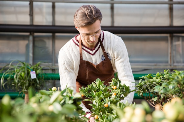 温室の小さな木の世話をする茶色のエプロンの集中した男の庭師
