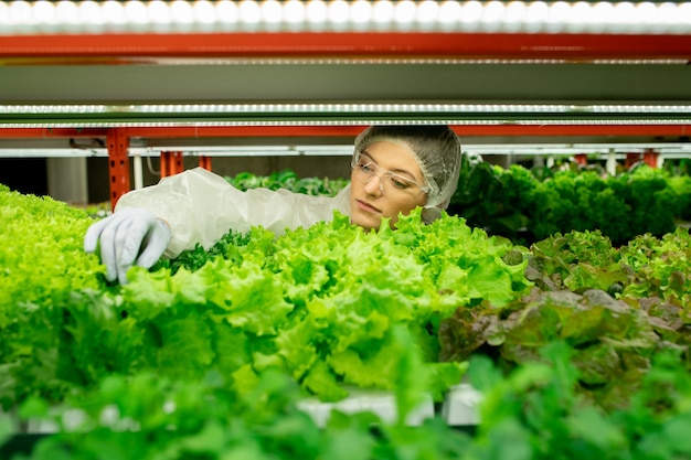 녹색의 품질을 제어하면서 잎을 만지는 안전 고글과 라텍스 장갑에 집중된 젊은 여성 공장 노동자 프리미엄 사진