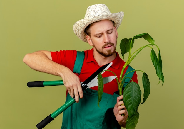 Concentrated young handsome slavic gardener in uniform and hat holding plant and cutting it with pruners isolated on olive green wall
