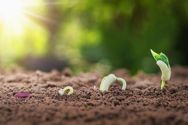 Концепция сельского хозяйства посадка посев растущий шаг в саду с солнцем