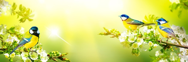 Concept of bird lovers and birdwatching. a beauty of the environment nature. ornithology.