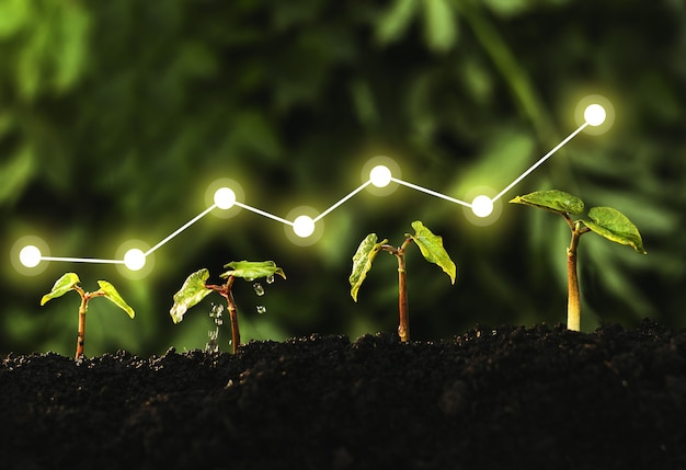 Concept of business growth, profit, development and success.seedling are growing from the rich soil.