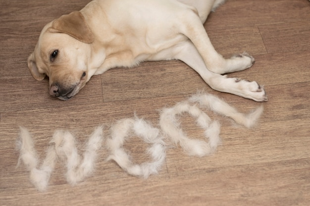 The concept of cleaning the house, dog wool