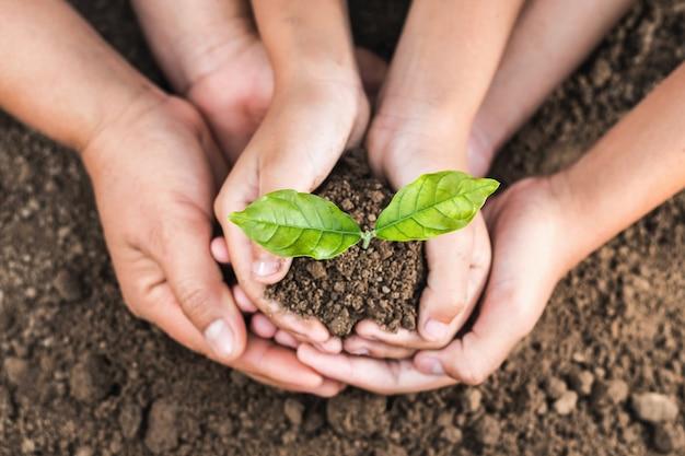 Концепция эко-рука, помогая защищать молодое растение