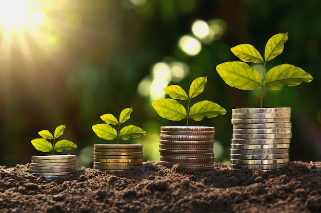 Concept finance and accounting growing. young plant on coins with sunrise