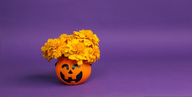 A concept for halloween and the day of the dead. marigolds in a pumpkin bucket for sweets on a purple background. holiday decorations for halloween and dia de los muertos