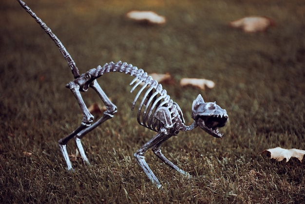 Concept of halloween. halloween skeleton of scary cat.