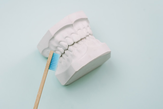 The concept of how to properly brush your teeth. bamboo tooth brusher lie on a blue background and next to the plaster model of the human jaw. oral care orthodontist.
