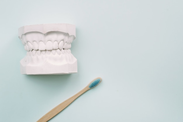 The concept of how to properly brush your teeth. bamboo toothbrushe lie on a blue background and next to the plaster model of the human jaw. oral care orthodontist.