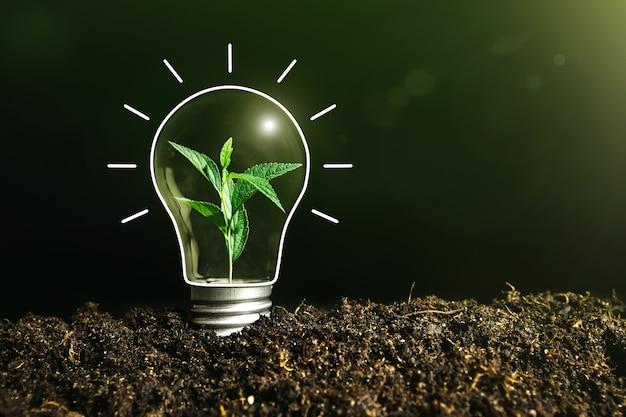 植物が中にある地面の電球のコンセプトイメージ