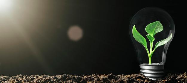 Концептуальное изображение лампочки на земле с растением внутри
