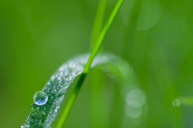 The concept of love the world green environment water droplets on the leaves blurred bokeh background