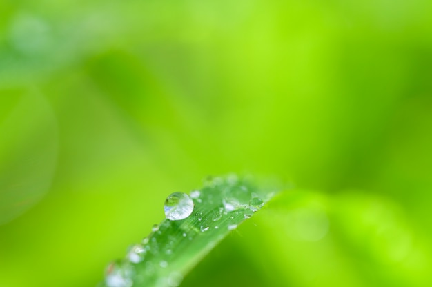 The concept of love the world green environment