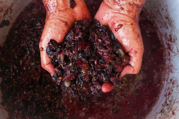 Concept of making homemade red wine.