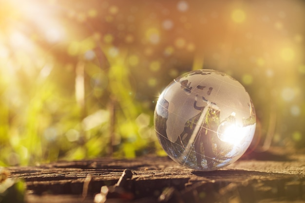 The concept of nature, green forest. crystal ball on a wooden stump with leaves.