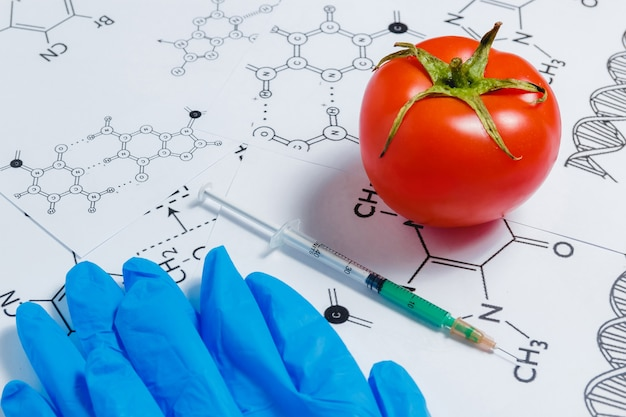 Concept of non-natural products, gmo. syringe, blue gloves and red tomato on white with chemical formula,