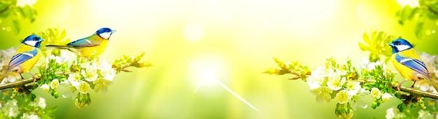 Концепция любителей птиц и наблюдения за птицами. красота окружающей среды. орнитология.