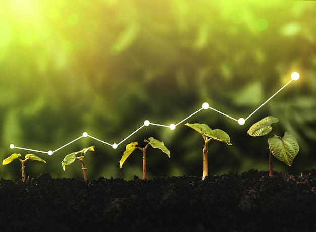 ビジネスの成長、利益、開発、成功の概念。苗木は豊かな土壌から成長しています。