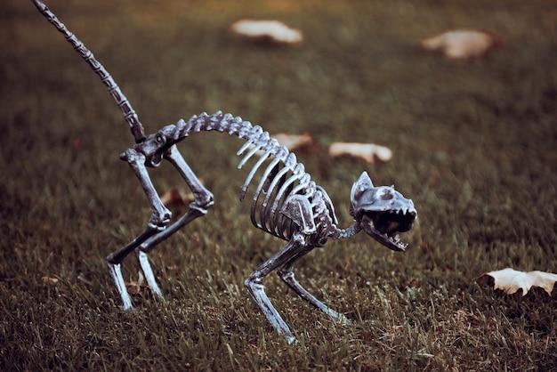Концепция хэллоуина. скелет страшной кошки на хэллоуин.
