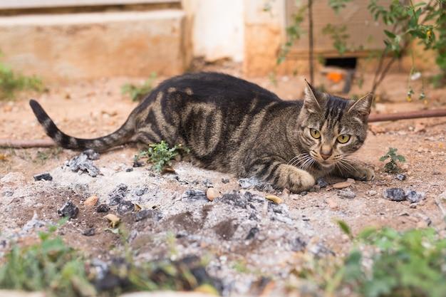 Концепция бездомных животных - милый кот на открытом воздухе