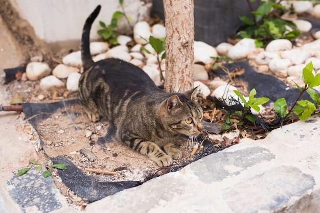 노숙자 동물의 개념-귀여운 고양이 야외.