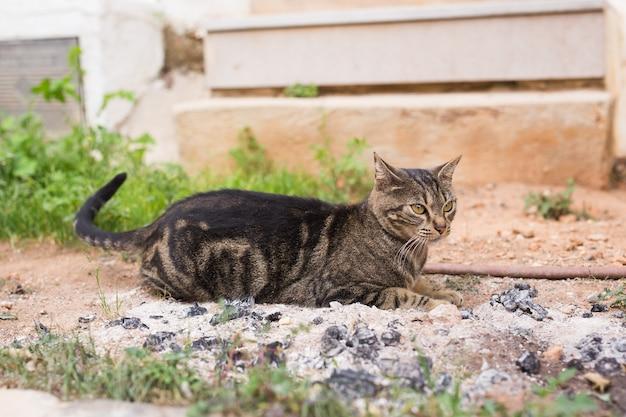 Понятие о бездомных животных - милый кот на открытом воздухе.