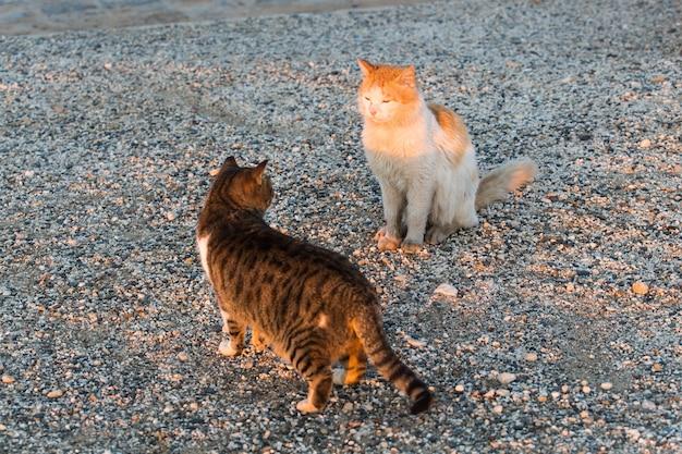 노숙자 동물의 개념 - 거리의 길 잃은 고양이.
