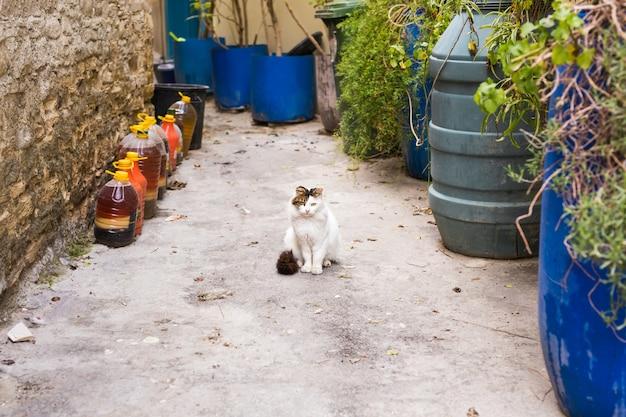 Концепция бездомных животных - милый бродячий кот на улице