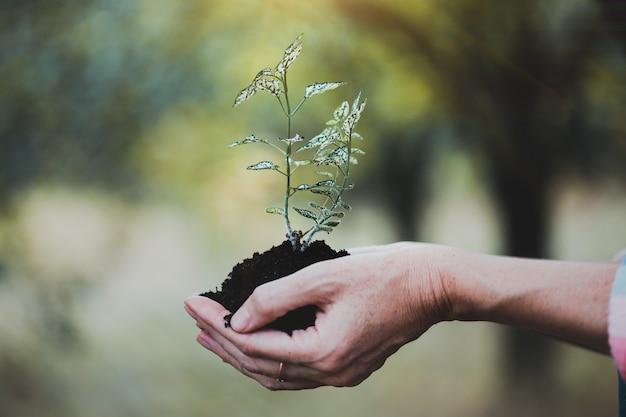 人生の概念-手に若い植物を持っている女の子
