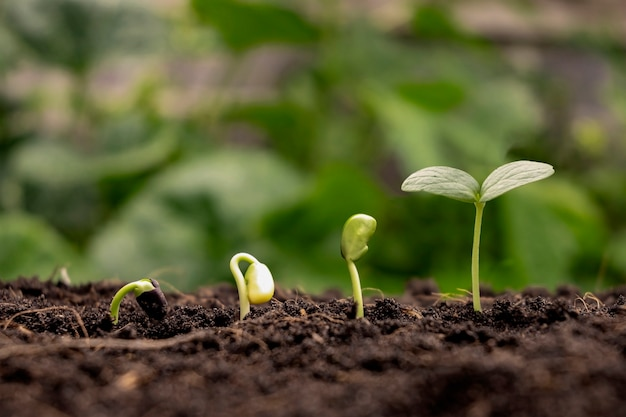 Концепция роста и выращивания растений деревья, растущие на плодородных почвах, соответственно, прорастание деревьев.
