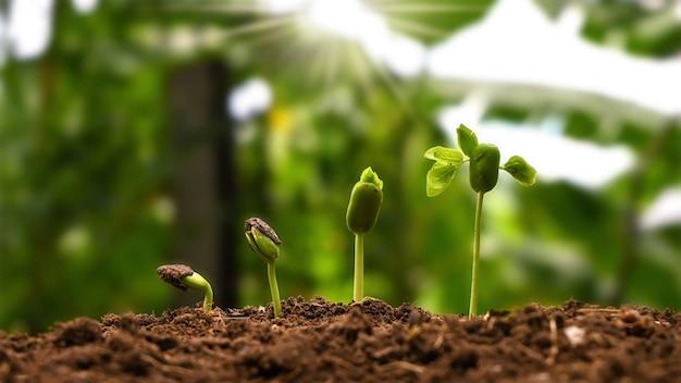 Понятие о выращивании и выращивании растений. деревья, растущие на плодородных почвах, соответственно прорастанию деревьев.