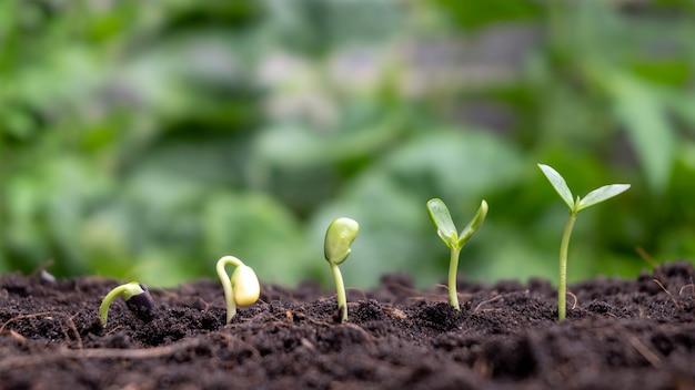 Концепция роста растений и выращивания деревьев на плодородных почвах