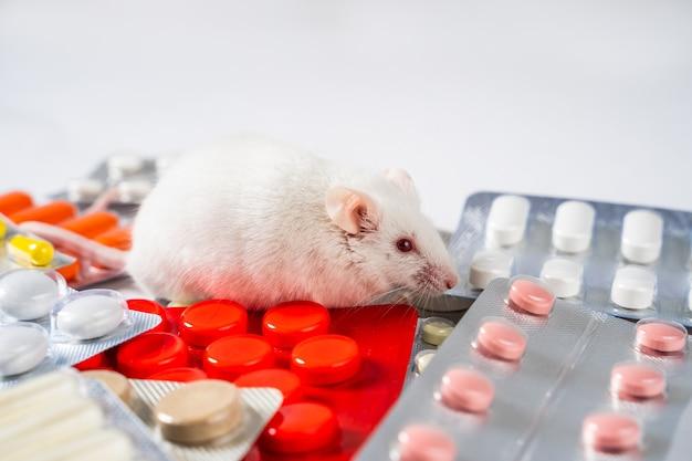 생쥐 및 실험 동물에 대한 신약 또는 화장품 테스트 개념