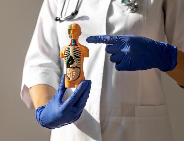 Концепция эндокринолога заболеваний щитовидной железы и трахеи с модельным телом человека d в руках