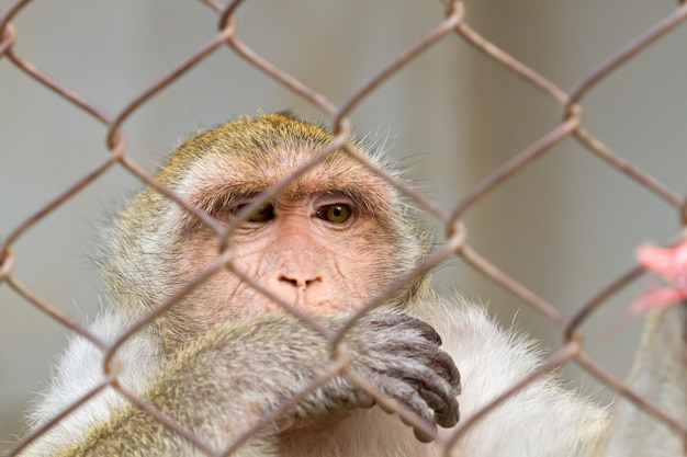 Concept of pleading eyes of animals confined in cages, israel