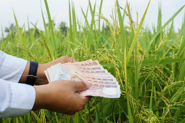 Concept rice to rich with hand of businessman give money.selective focus.