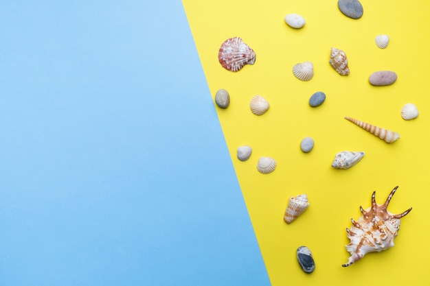 Concept summer vacation. seashells on yellow background. copy space. flat lay.