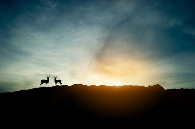 The concept of sunset silhouette and two deer on the mountain.