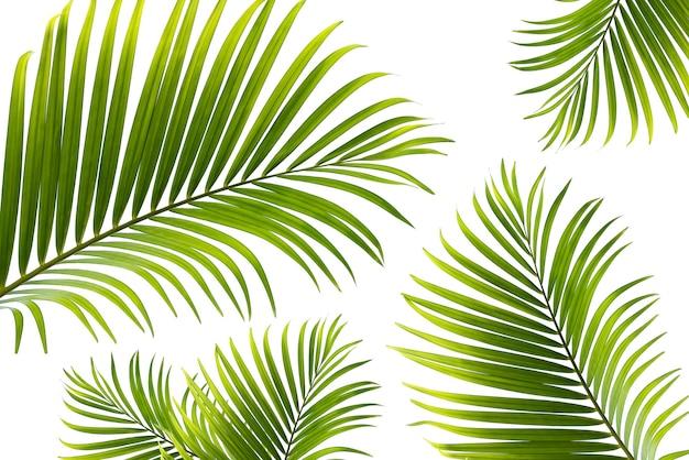 Концепция текстуры листья абстрактный зеленый фон природа тропические листья кокоса, изолированные на белом