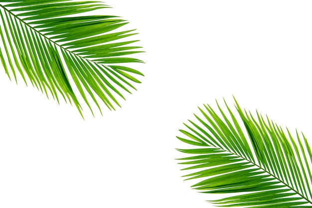 Concept texture leaves abstract green nature background tropical leaves coconut isolated on white