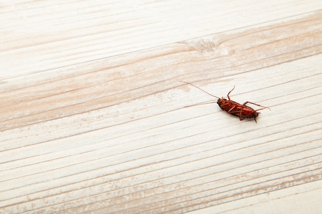 Концепция проблемы в доме из-за тараканов, живущих на кухне