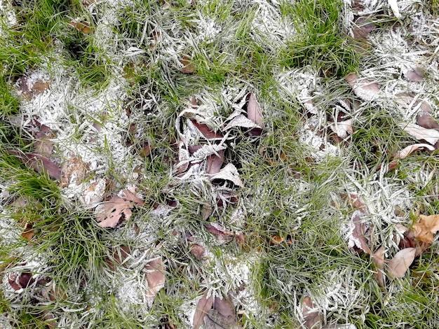 コンセプト:冬が来ています。霜で凍った雪の中の秋の緑の草と乾燥した葉の質感。上面図、クローズアップ
