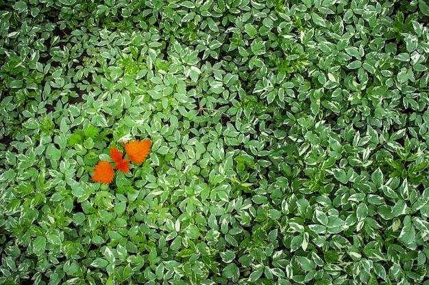 Концепция для бизнеса - лидерство или разнообразие, включение, принятие в команду, вызов. красный лист на фоне зеленых листьев.