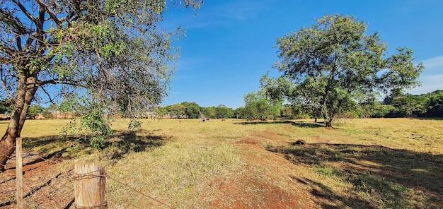 Концептуальное изображение фермы, фокус на заборе ствола с коровами